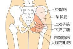 股関節 動き