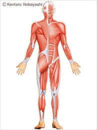 筋肉 筋活量